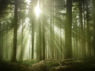 Preserving forests is critical to slowing global warming