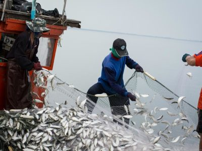 Science-to-policy insights for fisheries management